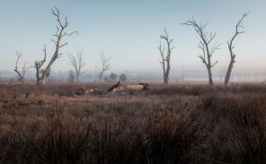 Mist at Winton Wetlands