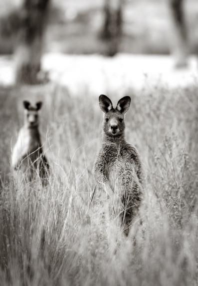 Roos watching us