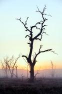 Sunrise at Lake Mokoan