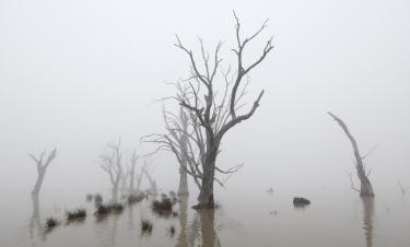 The Lake in Fog