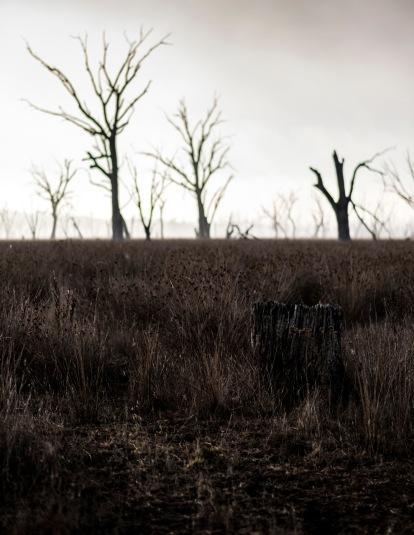 The Winton wasteland