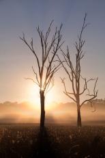 Warby Sunrise