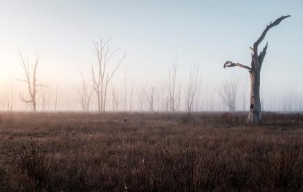 Winton Wetlands foggy sunrise