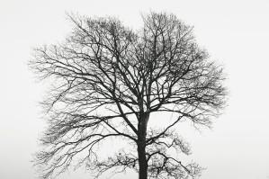 a-tree-in-geraldine