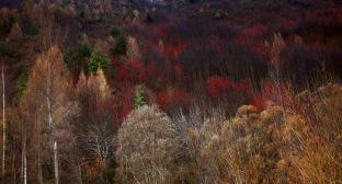The splendor of Autumn in Arrowtown