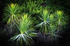 Photograph New Zealand Native Flora