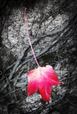Autumn in Beechworth