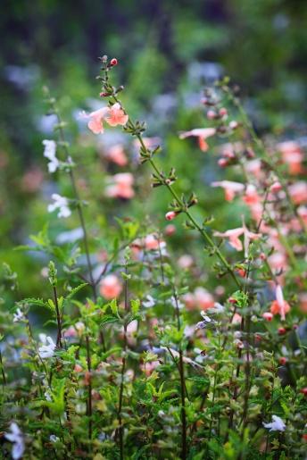 Benalla Gardens 2