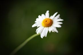 Flower in the Gardens