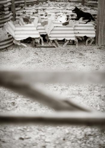 Iron Sheep in lockhart