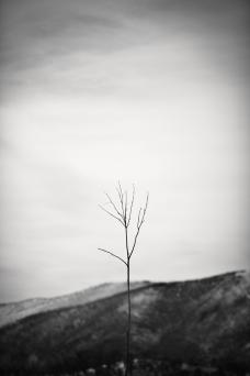 Vertical Branch B-W