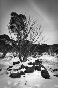 Vertical Tree B-W
