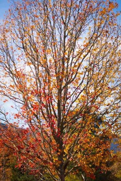 Autumn in Wandiligong