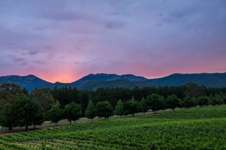 Feathertop Winery sunset wedding