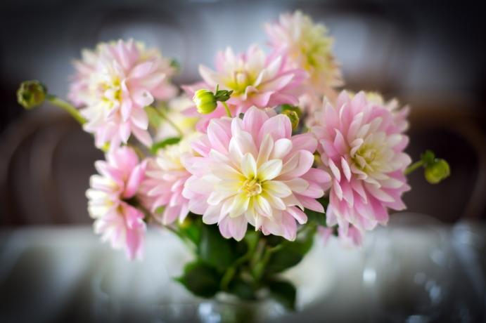 Seed and bloom Wangaratta
