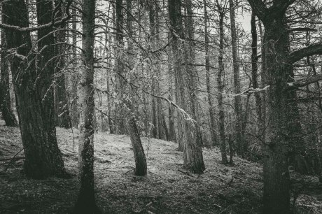 A forest in Lake Tekapo