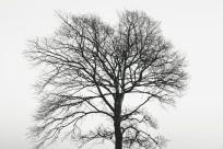 A tree in Geraldine