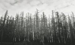 Forest at Lake Tekapo