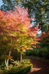 Forest Glade Gardens Mount Macedon 10