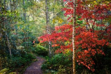 Forest Glade Gardens Mount Macedon 4