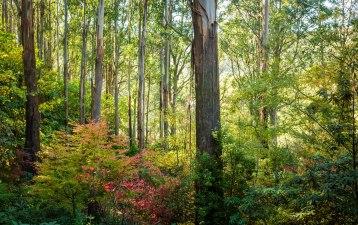 Forest Glade Gardens Mount Macedon 7