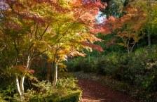 Forest Glade Gardens Mount Macedon 9