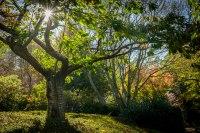 Forest Glade Gardens Mount Macedon