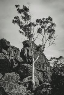 Lone Gum Hanging Rock