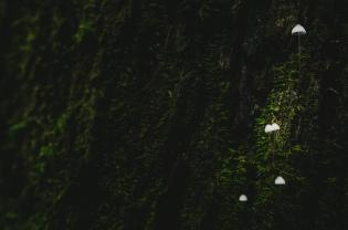 Mount Macedon Fungi 2