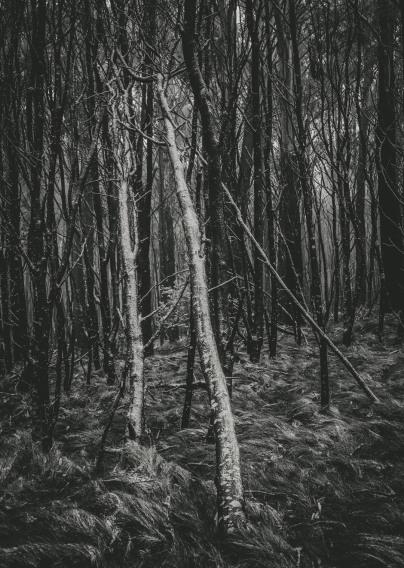 Mount Macedon Trees