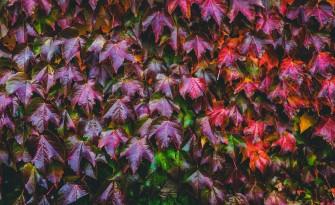 Mt Macedon in Autumn 3