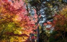 Mt Macedon in Autumn
