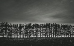 Rows on Riddell Road