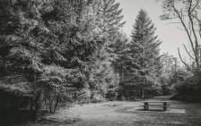 Sanatorium Lake Picnic Area