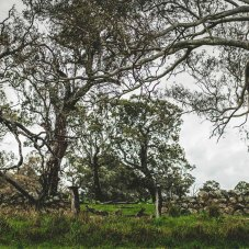 Kyneton-Photography-Workshop