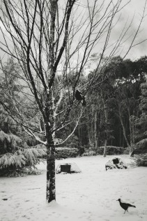 Mount Macedon in snow