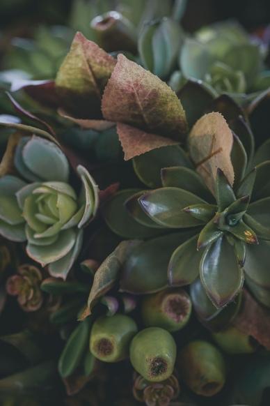 4-flowers