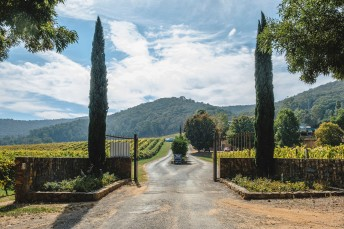 feathertop-winery