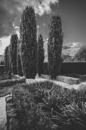Hepburn-Springs-Engagement-Photos-33